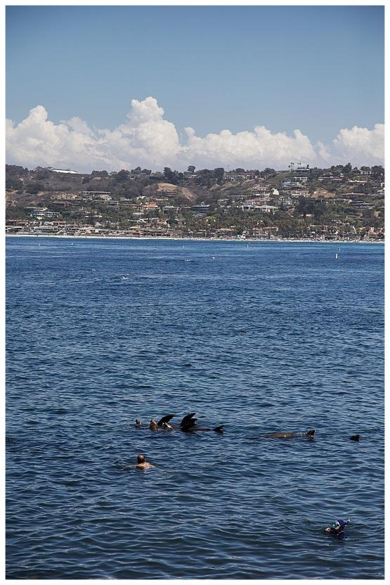 San Diego focas